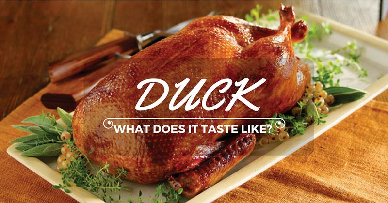 what does duck taste like