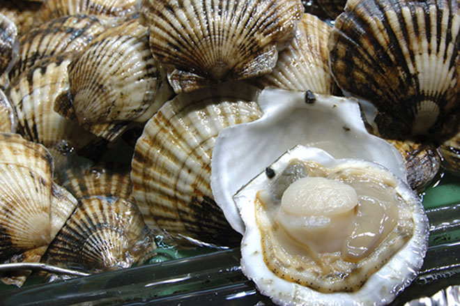 Seafood: Scallop