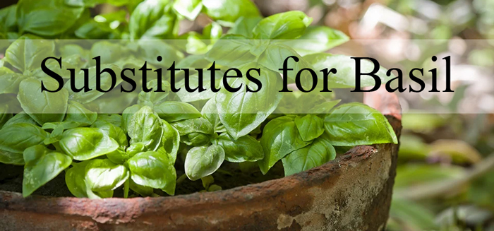 substitutes-for-basil-herbs